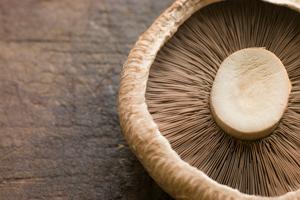 portabello-mushroom