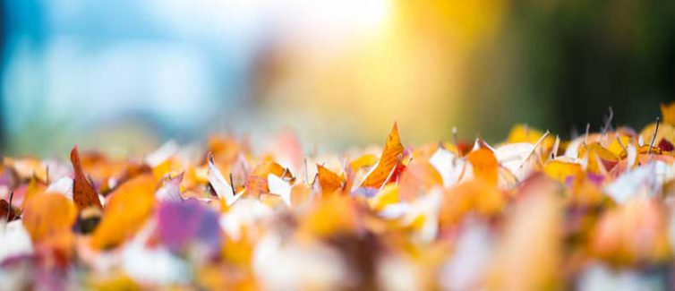 Learn more about the causes of fall allergies