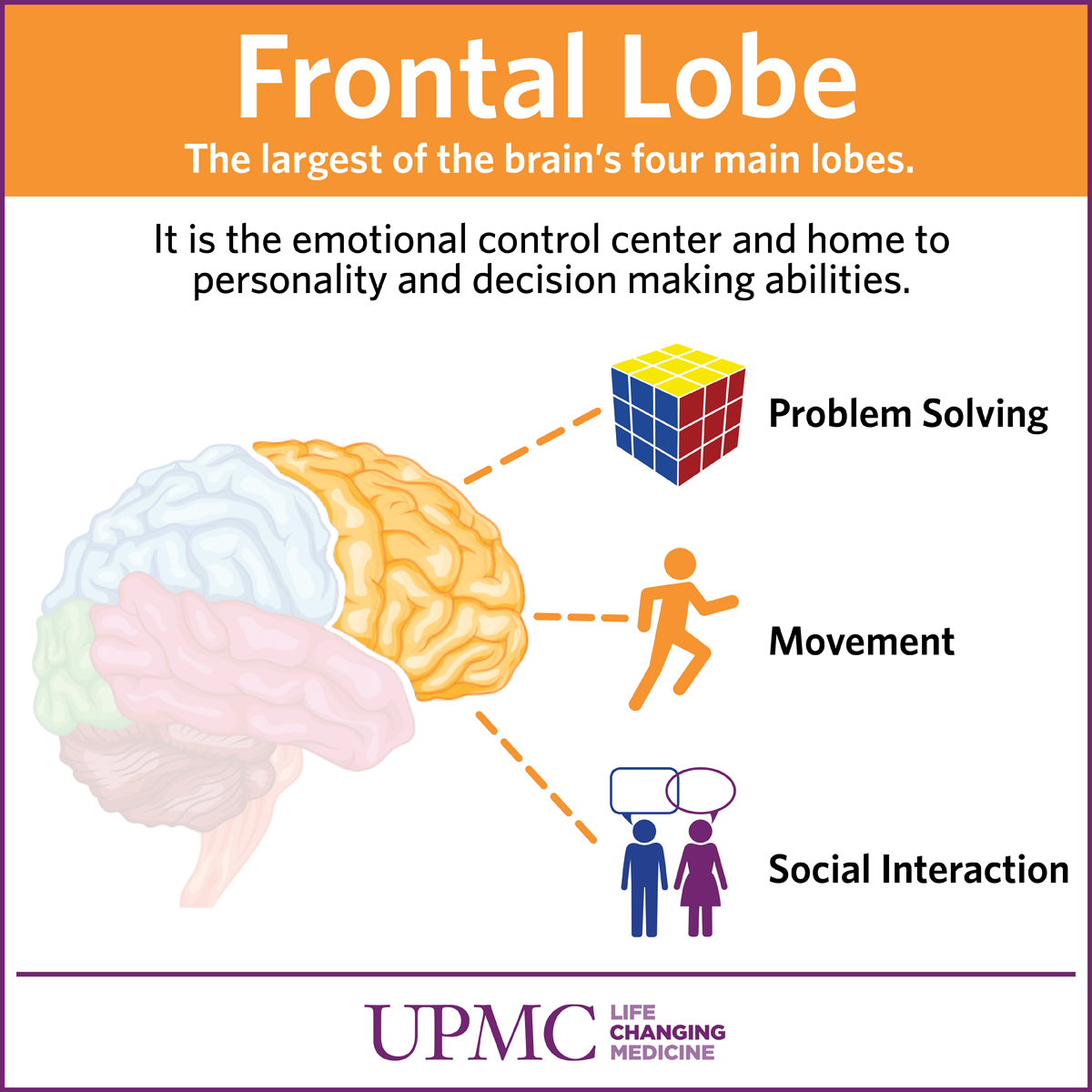 Get To Know Your Brain The Frontal Lobe Upmc Healthbeat