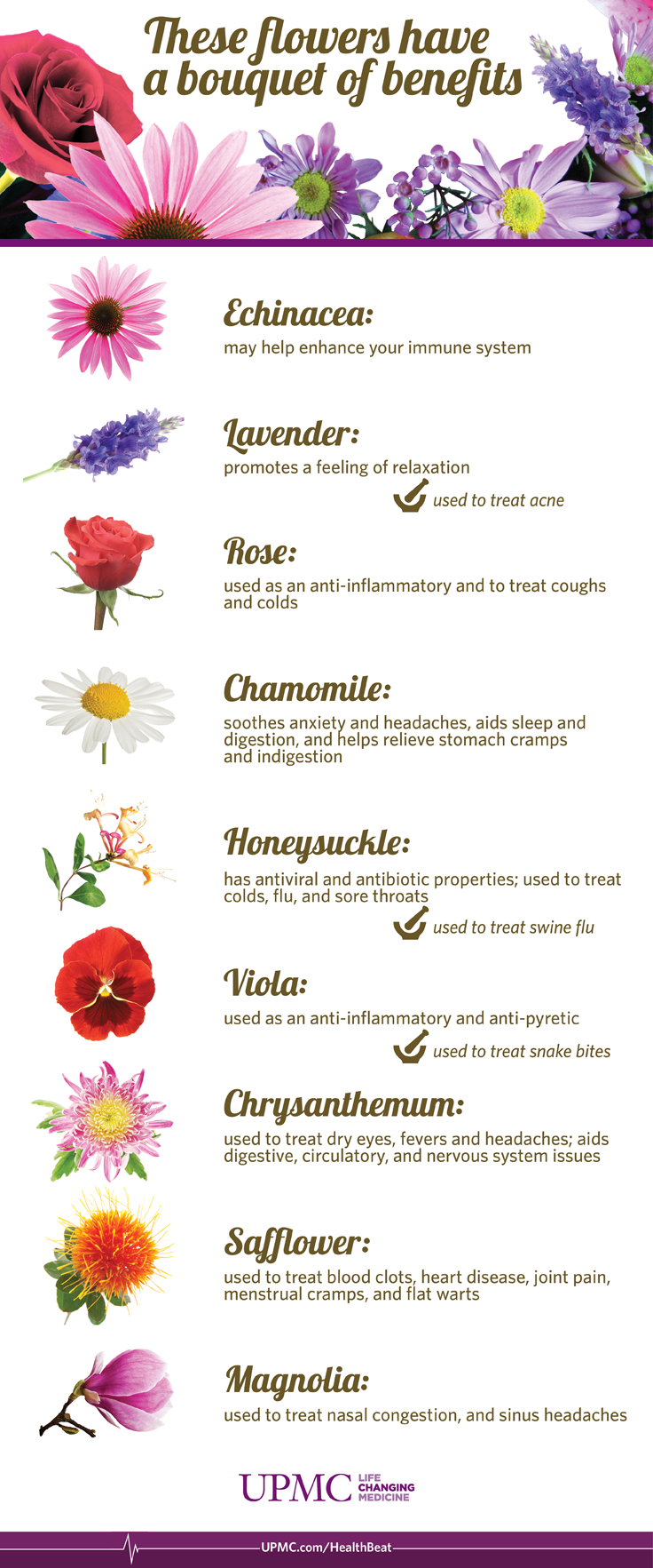 Infographic: Health Benefits of Flowers