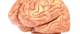 cerebellum