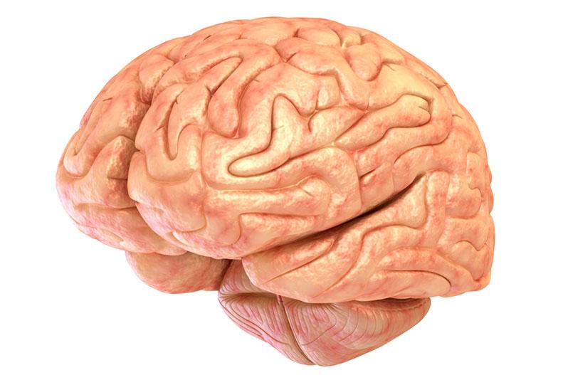Getting to Know Your Brain: Cerebellum   UPMC HealthBeat