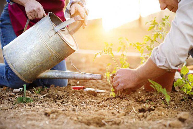 two people gardening