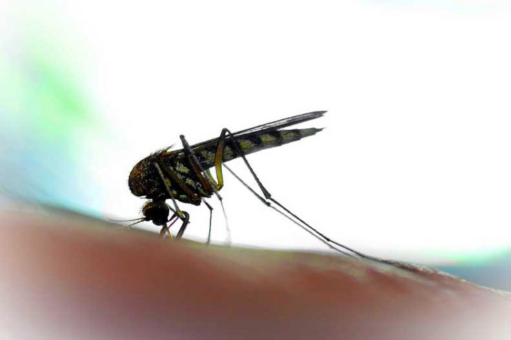 Learn about these common Zika virus facts and myths