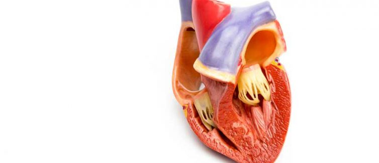 Learn more about the differences between mechanical and tissue valves