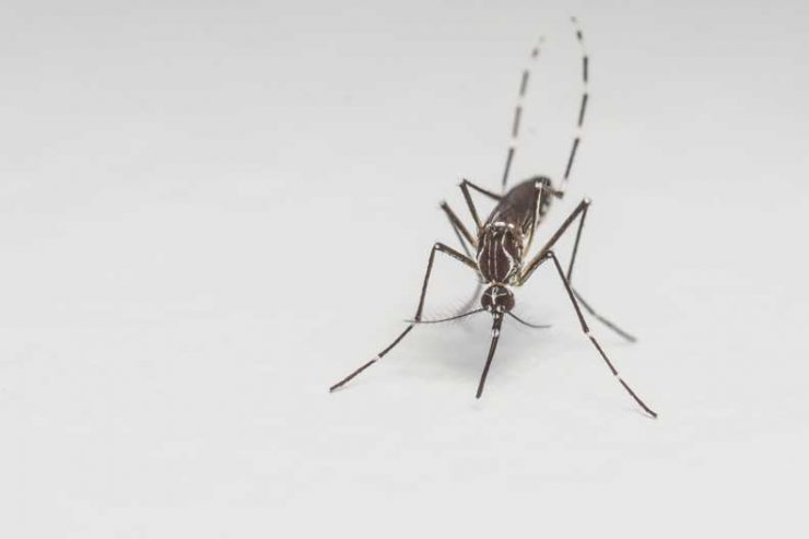 Learn more about a potential Zika virus vaccine
