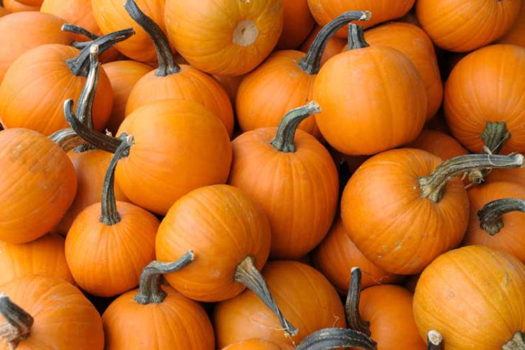 Pumpkins are a healthy food
