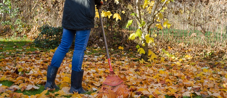 Learn how to avoid aches and pains while raking leaves.