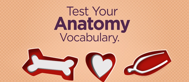 Test your vocabulary with this anatomy quiz