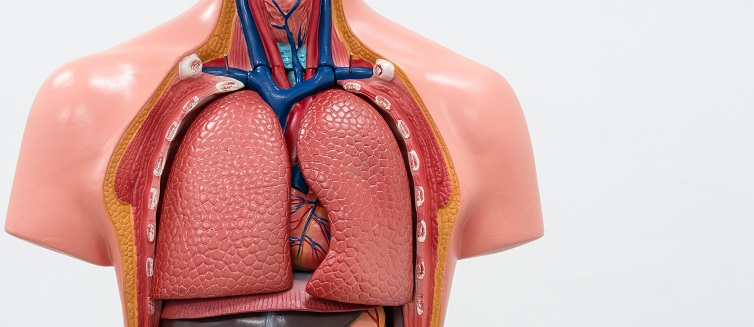 Learn more about Ex Vivo lung perfusion.