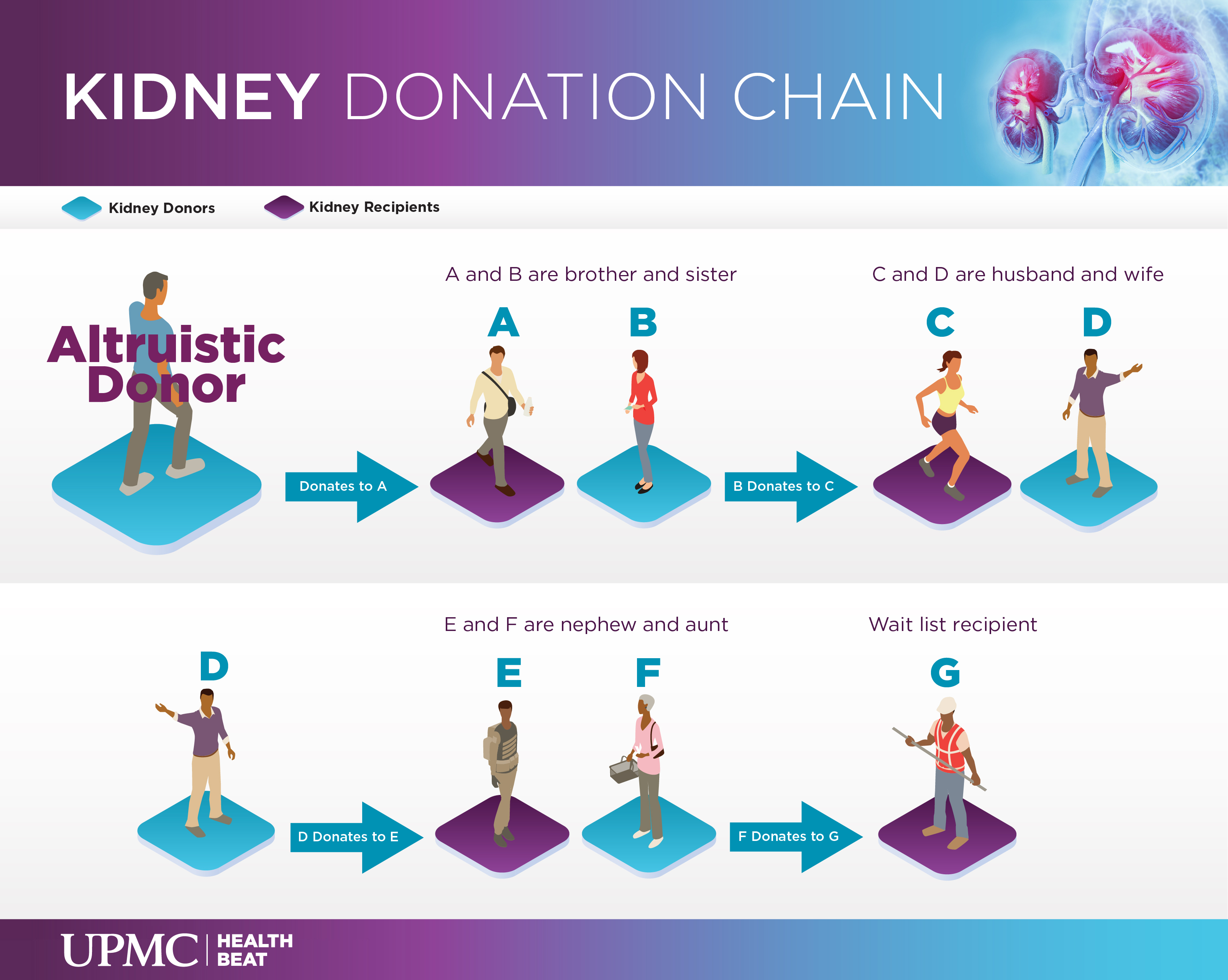 Learn more about kidney donation chains.
