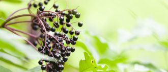 What Are the Benefits of Elderberry?