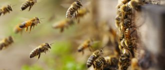 Surprising Facts About the Importance of Bees